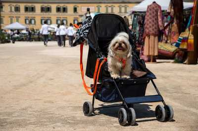 Una manifestazione dog-friendly